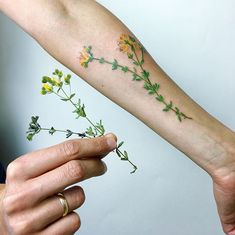 Plant Tattoo Example 2018 - New Tattoo Trend Armpit Tattoo, Botanisches Tattoo, M Tattoos, Piercing Tattoo, Finger Tattoos, Cute Tattoos, Beautiful Tattoos, Body Art Tattoos, Piercings