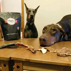 Do we have to take the picture can we just eat them pleeeeeeeeease. @Regrann from @life.of.mocha.and.bruce - This weekend we were able to meet the owners of @treatshappen! They are super down to earth people who make amazing natural dog treats! Mocha and Bruce can't get enough of their beef liver and duck feet! #bluedoberman #bluedobie #petexpo #reddoberman #reddobie #doberman #dobermanpride #dobermann #dogs #dogstagram #petstagram #dobermanlove #dobermansofig #dogsoftoronto #dogsofinstagram…