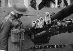 An Officer Cadet of the 1st Polish Armoured Division feeding juvenile owls mascots of the Artillery School in Blairadam Scotland at the end of the 5th educational term for Polish troops 17th May 1943. [800x555] #HistoryPorn #history #retro http://ift.tt/1Oxm5gi