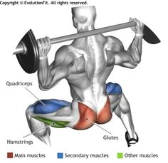 GLUTES - BARBELL SUMO SQUAT                                                                                                                                                      Plus