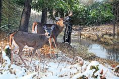 Bottomland Monarch - Whitetail by Jim Kasper