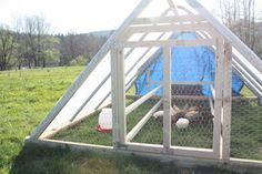 Want to make a chicken tractor like this!