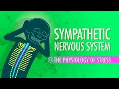 Sympathetic Nervous System: Crash Course A&P #14 - YouTube
