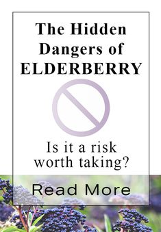 Elderberry may not be safe for everyone or safe for use with all viruses Health And Beauty, Health And Wellness, Health Tips, Health Fitness, Healing Herbs, Natural Healing, Natural Health Remedies, Herbal Remedies, Elderberry Ideas