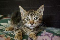Tana es una gatita cariñosa y muy tranquila. Es de tamaño muy pequeño y es muy tierna. Es muy limpita y le gustan mucho los mimos. Necesita una casita donde la den mucho cariño