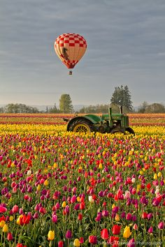 Hot air balloon floating over a field of tulips