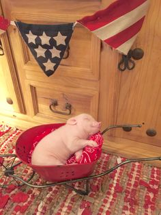 25 An adorable baby pig - meowlogy Cute Baby Pigs, Baby Piglets, Cute Piglets, Cute Babies, This Little Piggy, Little Pigs, Tout Rose, Teacup Pigs, Mini Pigs
