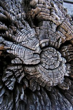 Photos with Texture have great focus and clear look at what something might feel like in real life. Often from nature This is a very cool piece. The rotted missing chunks of wood give an interesting texture. Natural Form Art, Natural Texture, Natural Wood, Texture Photography, Macro Photography, Photography Ideas, Pattern In Photography, Levitation Photography, Water Photography