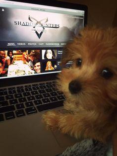 Katherine McNamera's dog Sophie even loves #Shadowhunters on #ABCFamily