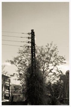 Pole inside a tree Social Art, Utility Pole, Photography, Photograph, Fotografie, Photoshoot, Fotografia
