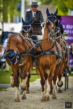 "beauxchevaux: "" showjumpingpassion: "" FEI European Championships Source: Noelle Floyd "" Holy moly this is beautiful. """