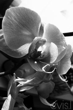 Beautiful sunset ! #lovely#atmosphere#blackandwhite#photography#sunset#nature#passion#autumn#life#flower#art#artist#orchid