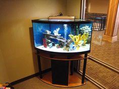 Aqauriums   Fish Aquarium Gallery Of Aquatic Designs   Aquarium Maintenance  ... Corner Aquarium