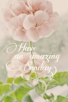 Good Morning And Happy Sunday Have An Amazing Day! Sunday Morning Quotes, Sunday Wishes, Morning Quotes Images, Happy Sunday Quotes, Good Morning Messages, Good Morning Greetings, Good Morning Good Night, Morning Wish, Sunday Messages
