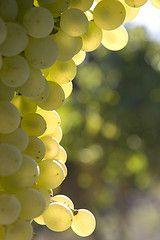 Raisins Drôme drome vin gastronomie http://www.vin-gastronomie-drome.com/