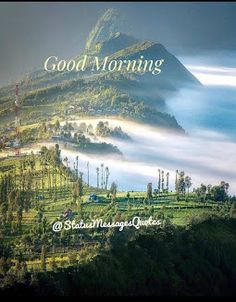 Best Good Morning Status for Love, Friends and Family Funny Good Morning Greetings, Good Morning Sunday Images, Good Morning Wishes Quotes, Good Morning Beautiful Flowers, Good Morning Happy Sunday, Good Morning Roses, Good Morning Image Quotes, Morning Quotes Images, Good Morning Picture