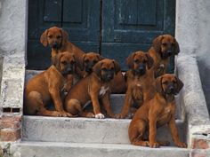 Would like them on my door step