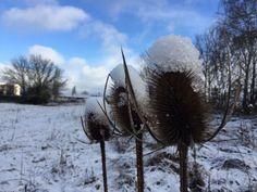 Primera nevada del año en #Arkaia ¡Buen sábado! #turismorural junto a #vitoria #gasteiz #accesible #conalma #ecologia #igerseuskadi #igersgasteiz @nekatur_euskadi @turismo_vitoria @toprural @agrotravel @lonelyplanet_es
