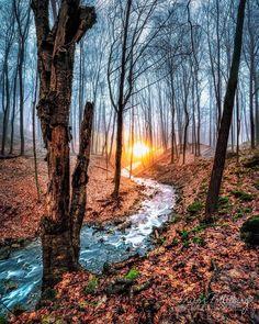***Woodland dawn (Ancaster, Ontario) by Trevor Pottelberg-Earthscapes (@trevorpottelberg) on Instagram