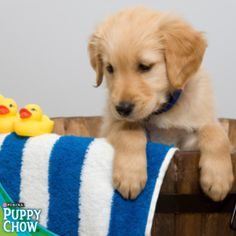 Puppy bath time! Purina® Puppy Chow®