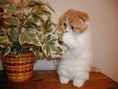 Gambar+Kucing+Lucu+dan+Imut+72.jpg (640×480)