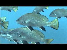 El mar a fons: els peixos Pets, Youtube, Animals, Flat, Animaux, Animal, Animales, Youtubers, Youtube Movies