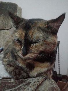 A minha gata está em cima da lenha ao pé da lareira!?