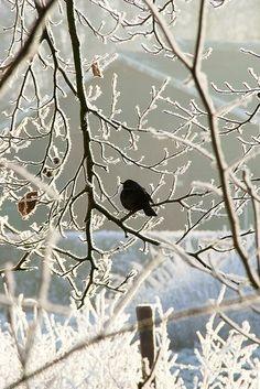 frosty morning...My little Joyful Heart