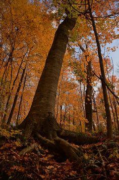 ✯ Brukner Nature Preserve - Troy, Ohio