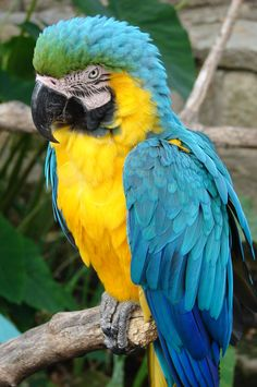 My future pet. I think they are the most beautiful birds in the world. <3