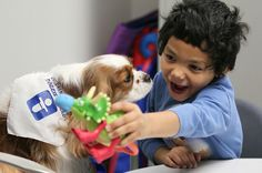 Angel Bowling, who has autism, roars like a dinosaur as he plays with Izzie, a Cavalier King Charles Spaniel, during speech therapy at Akron Children's Hospital in Akron, Ohio. A new study suggests that detecting the developmental disorder often takes more than brief observation. (Mike Cardew/Akron Beacon Journal/TNS)