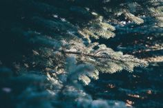 New free stock photo of nature trees plant