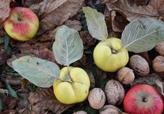 Φθινοπωρινές συμβουλές ευζωίας! Feng Shui, Apple, Fruit, Garden, Flowers, Food, Apple Fruit, Garten, Lawn And Garden