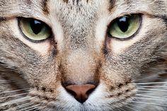The Killer Inside of Every Housecat