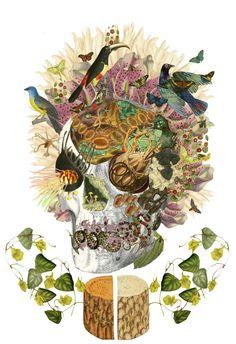 """memento mori v2"" anatomical collage art by bedelgeuse"