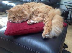 The red Royal cushion treatment