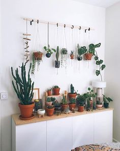 Our 10 Favorite Pet-Safe Indoor Plants and 7 to Avoid- Pistils Nursery