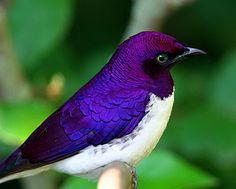 iridescent animal - Google Search