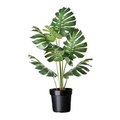 "FEJKA artificial potted plant, monstera Diameter of plant pot: 8 ¼ "" Height: 32 ¼ "" Diameter of plant pot: 21 cm Height: 82 cm. Ikea Plants, Patio Plants, Cool Plants, Potted Plants, Indoor Plants, House Plants, Faux Plants, Silk Plants, Nature Plants"