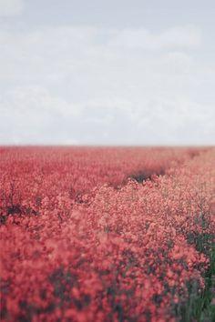 Imagen de flowers, pink, and sky