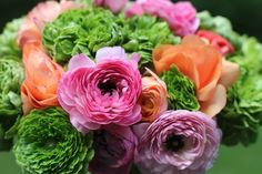 """In the language of flowers, a bouquet of ranunculus says, """"I am dazzled by your charms."""""""