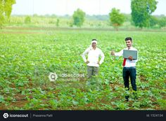 agronomist with farmer at cotton field Photo Agriculture Photos, Cotton Fields, 3d Assets, Icon Pack, Photo Illustration, Farmer, Vector Free, Photoshop, Animation