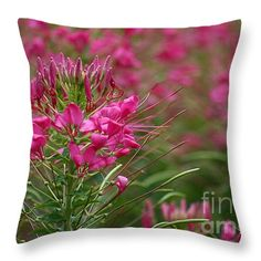 """""""Pink Queen Spider Flower"""" © E. B. Schmidt. All Rights Reserved. Pink floral decor throw pillow. (Available as prints, canvas, metal, and more.) www.ebschmidt.com #art #schmidt #flowers #FloralDecor #PinkDecor"""