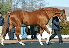 Gorgeous, Charismatic,Kentucky Derby & Preakness Winner 1999.  He and California Chrome share a common ancestor . . .Secretariat, of coarse!
