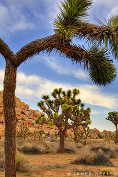 Joshua Tree National Monument near Palm Springs, CA, was a place for many Scout hikes and outings, including getting a whole troop lost one time.....memories!  ......Pat