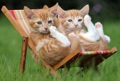 Cute & Cuddly Animals Archives - Page 2 of 2 - Richard Austin Images Animals And Pets, Baby Animals, Funny Animals, Cute Animals, I Love Cats, Crazy Cats, Cool Cats, Cute Kittens, Cats And Kittens
