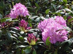 Flowers, Garden Ideas, Gardening, Dressmaking, Plant, Lawn And Garden, Landscaping Ideas, Backyard Ideas, Royal Icing Flowers