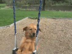 Todo mundo sabe que os verdadeiros cachorros de colo não são feitos para CABER no seu colo.