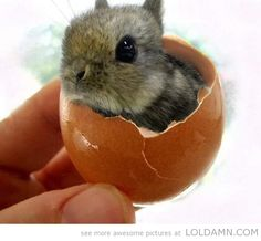 Mind blown! Hello Easter Bunny!