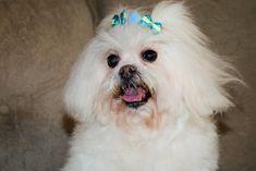 Pet Puppy, Puppies, Pets, Animals, Cubs, Animales, Animaux, Animal, Animais